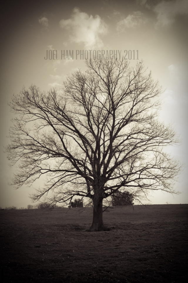 Copyright Joel Ham Photography 2011